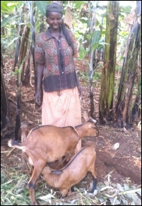 FURTHER REPORT OF GOATS GIVEN TO  NDEGO, NKONDO, NASHO AND KIGARAMA PARISHES.docx
